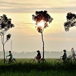 Công ty du lịch chuyên tour miền Tây: Tiền Giang - Cần Thơ - 2 ngày đi từ Sài Gòn