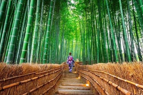 Đặt tour du lịch Nhật Bản Tokyo - Kyoto - Nagoya- Osaka - Rừng tre Sagano