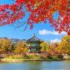 Tour Hàn Quốc mùa lá đỏ