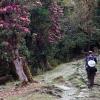 Tour du lịch Bhutan mùa hoa đỗ quyên